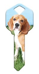 HK63 - Beagle house, happy, key, beagle, dog, puppy, kw1, kw10, sc1, wr5