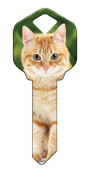 HK66 - Orange Tabby house, happy, key, orange, tabby, cat, kitten, kw1, kw10, sc1, wr5